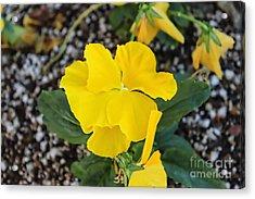 Floral Desert Beauty Acrylic Print