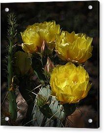 Desert Blooming Acrylic Print by Elaine Malott