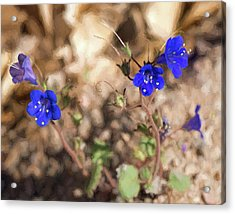 Desert Blue Bells At Joshua Tree National Park Acrylic Print by Penny Lisowski