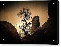 Desert Bonsai II Acrylic Print