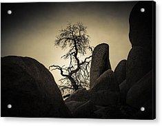 Desert Bonsai Acrylic Print