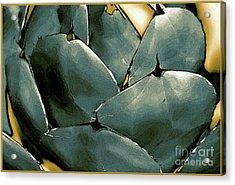 Desert Botanical 2  Acrylic Print by Linda  Parker