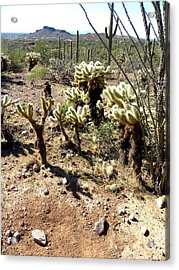 Desert Cactus 7 Acrylic Print by Patricia Bigelow