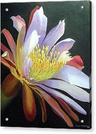 Desert Cactus Flower Acrylic Print