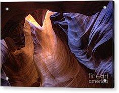 Desert Camel Acrylic Print