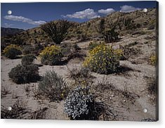 Desert Canyon Wildflower Bloom Acrylic Print