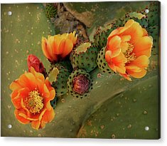Acrylic Print featuring the photograph Desert Flame by Lucinda Walter