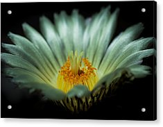 Desert Flower Acrylic Print