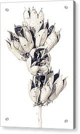 Desert Flower Acrylic Print by Racheal Christian