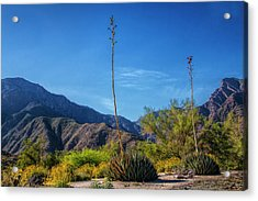 Acrylic Print featuring the photograph Desert Flowers In The Anza-borrego Desert State Park by Randall Nyhof