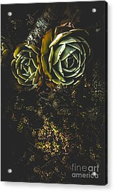 Desert Flowers Acrylic Print by Jorgo Photography - Wall Art Gallery