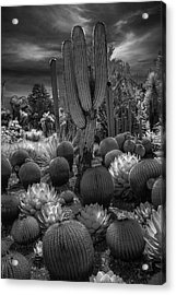 Desert Garden With Cacti At The Huntington Botanical Garden In California Acrylic Print by Randall Nyhof