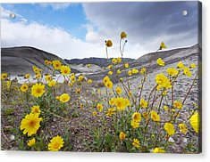 Desert Gold In Death Valley Acrylic Print by Dung Ma