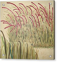 Desert Grasses Acrylic Print by Wendy Peat
