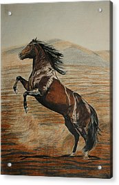 Acrylic Print featuring the drawing Desert Horse by Melita Safran