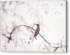 Desert Hummingbird II Acrylic Print by Carolina Liechtenstein