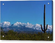 Desert Inversion Cactus Acrylic Print