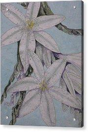 Desert Lillie  Close-up Acrylic Print by David Kelly