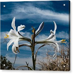 Acrylic Print featuring the photograph Desert Lilly Close Up by Jeremy McKay