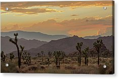 Desert Magic Acrylic Print