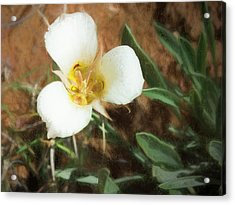 Desert Mariposa Lily Acrylic Print by Penny Lisowski