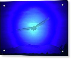 Desert Nights Acrylic Print by Debra     Vatalaro