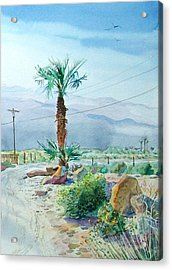 Acrylic Print featuring the painting Desert Palm by John Norman Stewart