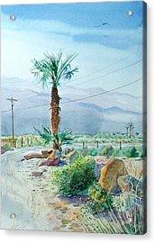 Desert Palm Acrylic Print by John Norman Stewart
