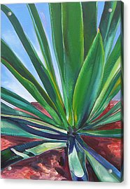 Desert Plant Acrylic Print by Karen Doyle