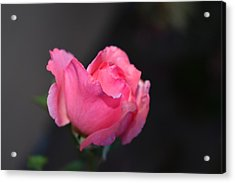 Desert Rose 1 Acrylic Print