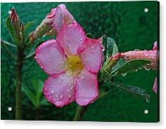 Desert Rose On Green Acrylic Print by John Roncinske