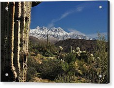 Desert Snow Acrylic Print by John Gee