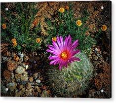 Desert Splash Acrylic Print