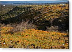 Acrylic Print featuring the photograph Desert Spring Flowers by Dave Dilli