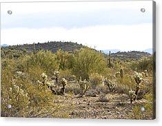 Acrylic Print featuring the photograph Desert Sunrise by Phyllis Denton