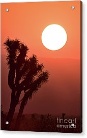 Desert Sunrise Acrylic Print