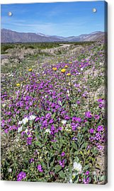 Desert Super Bloom Acrylic Print by Peter Tellone