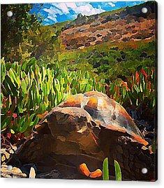 Desert Tortoise Acrylic Print