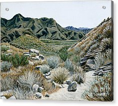 Desert Trail Acrylic Print by Jiji Lee
