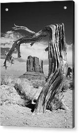 Desert Tree Acrylic Print by Mike Irwin