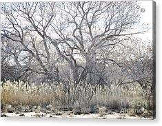 Acrylic Print featuring the photograph Desert Tree Willows by Andrea Hazel Ihlefeld