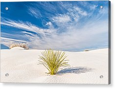 Desert Trio - White Sands National Monument Photograph Acrylic Print by Duane Miller