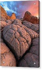 Desert Turtle Acrylic Print