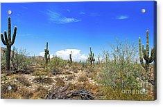 Desert View Acrylic Print