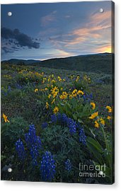 Desert Wildflower Sunset Acrylic Print