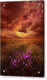 Desire Acrylic Print by Phil Koch