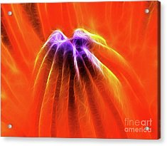 Desire Acrylic Print by Wingsdomain Art and Photography
