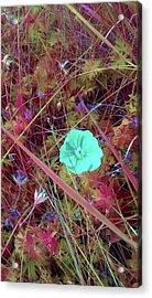 Desolate Beauty Acrylic Print