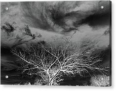Desolate Feel Acrylic Print