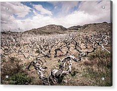 Acrylic Print featuring the photograph Desolation by Andrew Matwijec